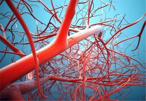 Human Blood Vessels