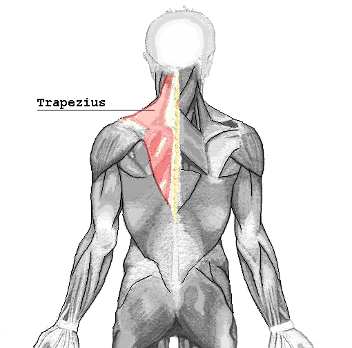 Creative Image of the Trapezius Muscle