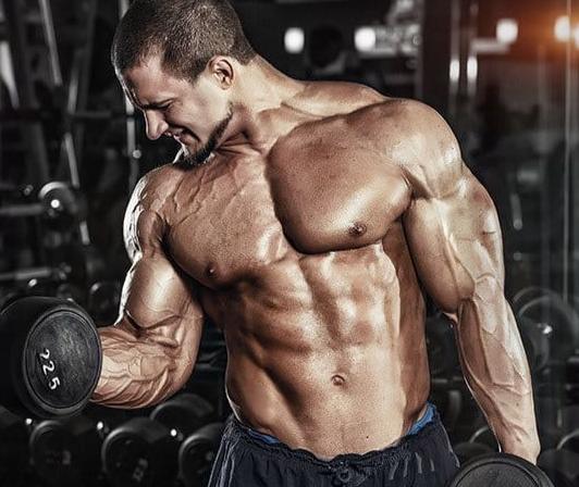 Max Gains Bodybuilder